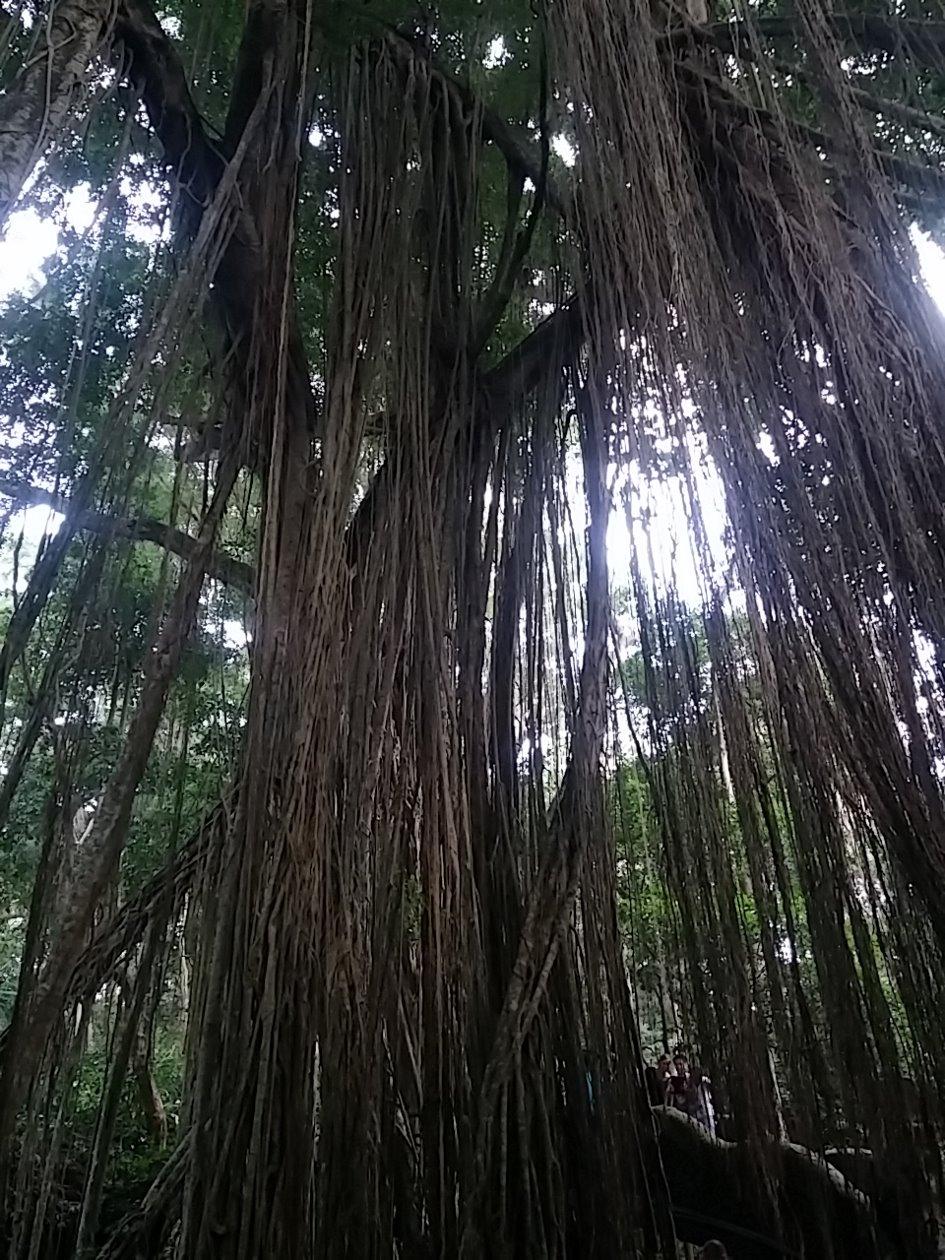 InduStone - wizyta w indonezji